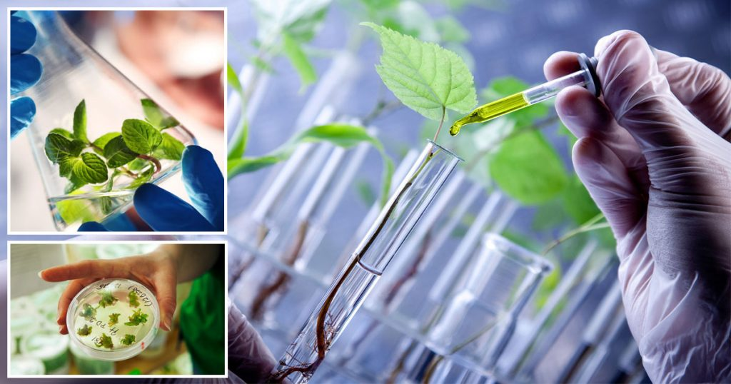 M.Tech in plant biotechnology